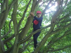 Tash climbs her first tree